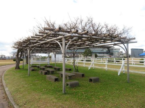 金沢競馬場の内馬場の藤棚