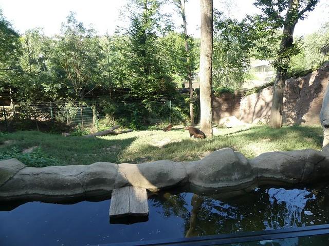 Vielfraß-Gehege, Zoo Brno