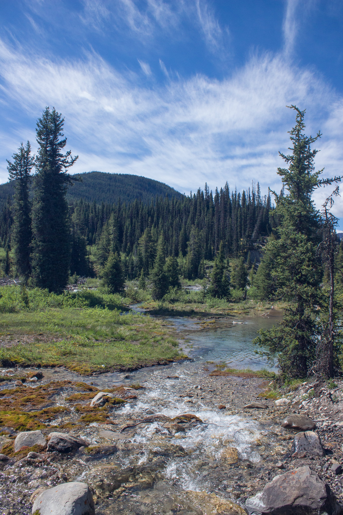 Alpine meadow - Johnston Canyon and the Inkpots