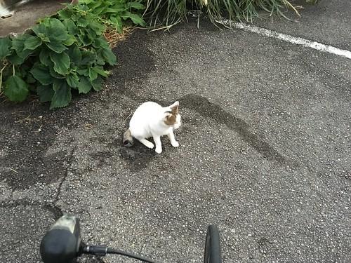 四国(の海沿い)はネコが多くて癒される(1)