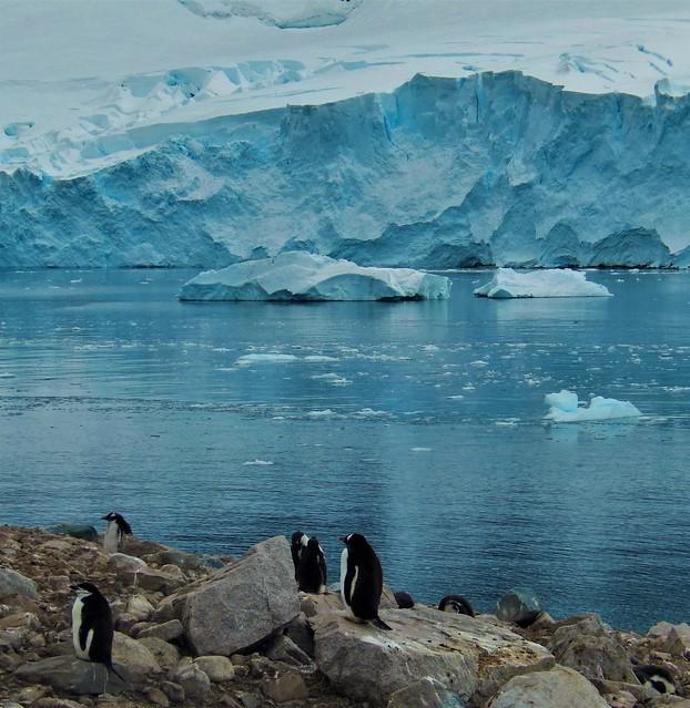 Penguin colony, Neko Harbor, Nikon COOLPIX S9500