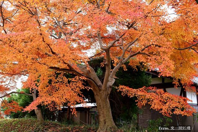 鷺森神社25