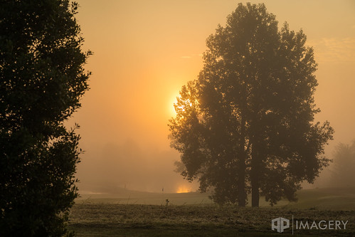 haze pearl sunrise tree pearlclub landscape club summit fog tpc hazy golfcourse foggy kentucky usa