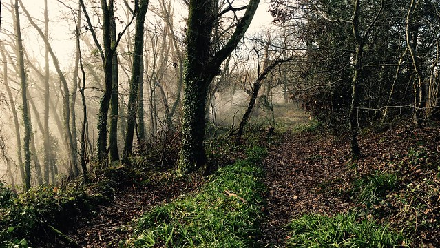 Photo of misty woodland path