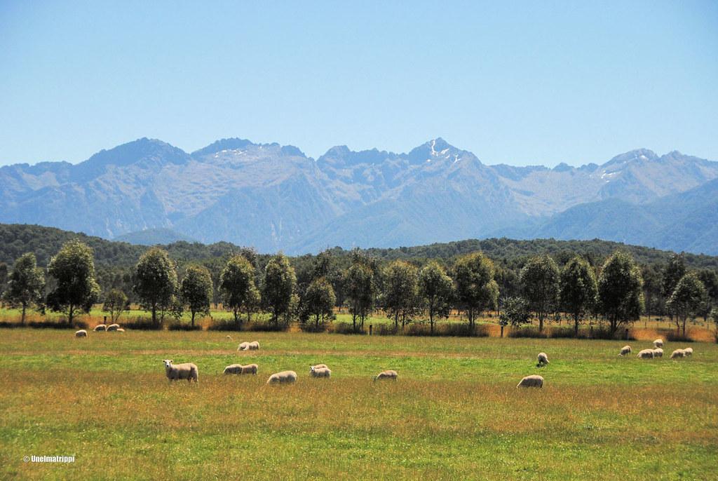 Lampaita ja vuoria matkalla Invercargillistä Te Anauhun, Uusi-Seelanti