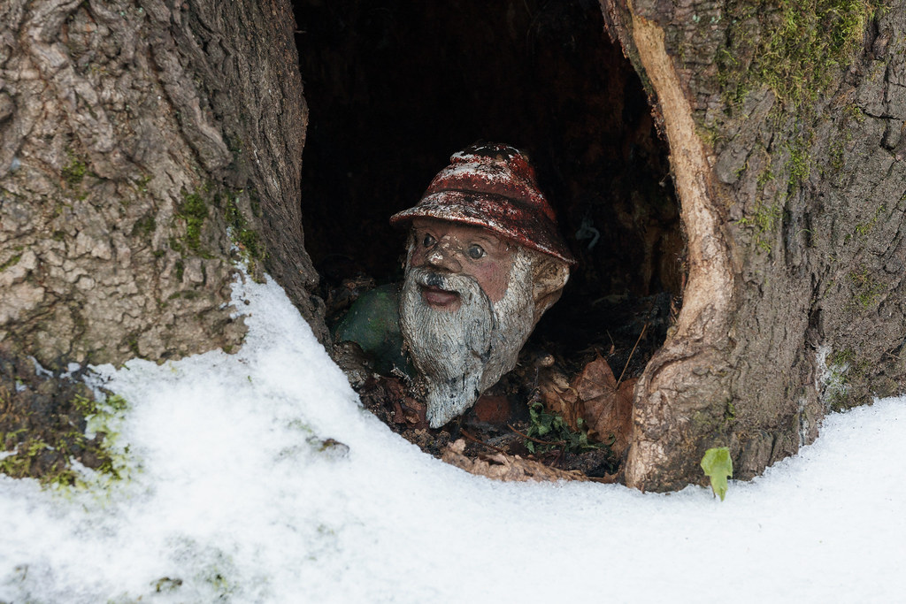 A gnome in the cavity of a tree is surrounded by snow