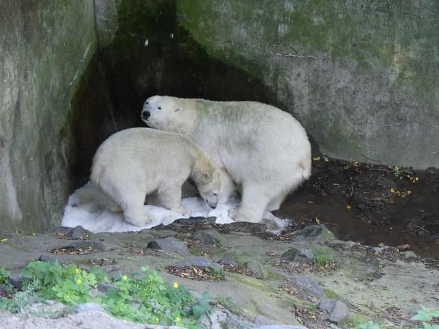 Cora und Noria, Zoo Brno