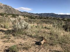Sandia Pueblo (5)