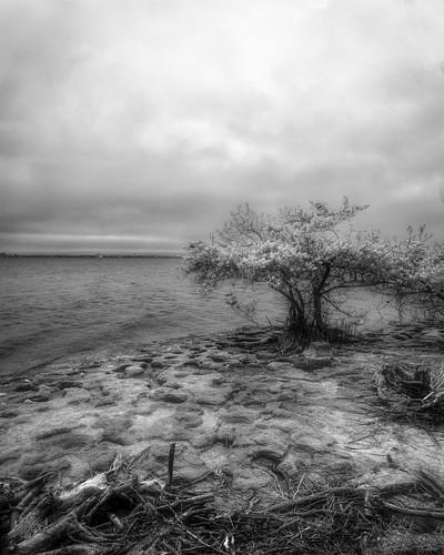 rock usa blackandwhite riverscape water ©edrosack panorama florida infrared river cloud landscape sky centralflorida bw mangrove tree rockledge cloudy ir