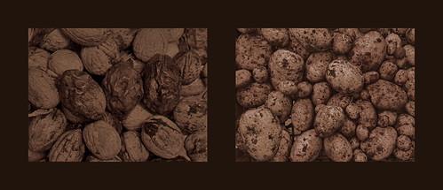 For the Nut Strudel we don`t need Nuts and Bolts but Nuts and Potatoes - Walnuts Erdäpfeln Kartoffeln Grundbirnen (erntefrisch, Garten 2017) / Walnüsse - auf dem Weg zum Nußstrudel