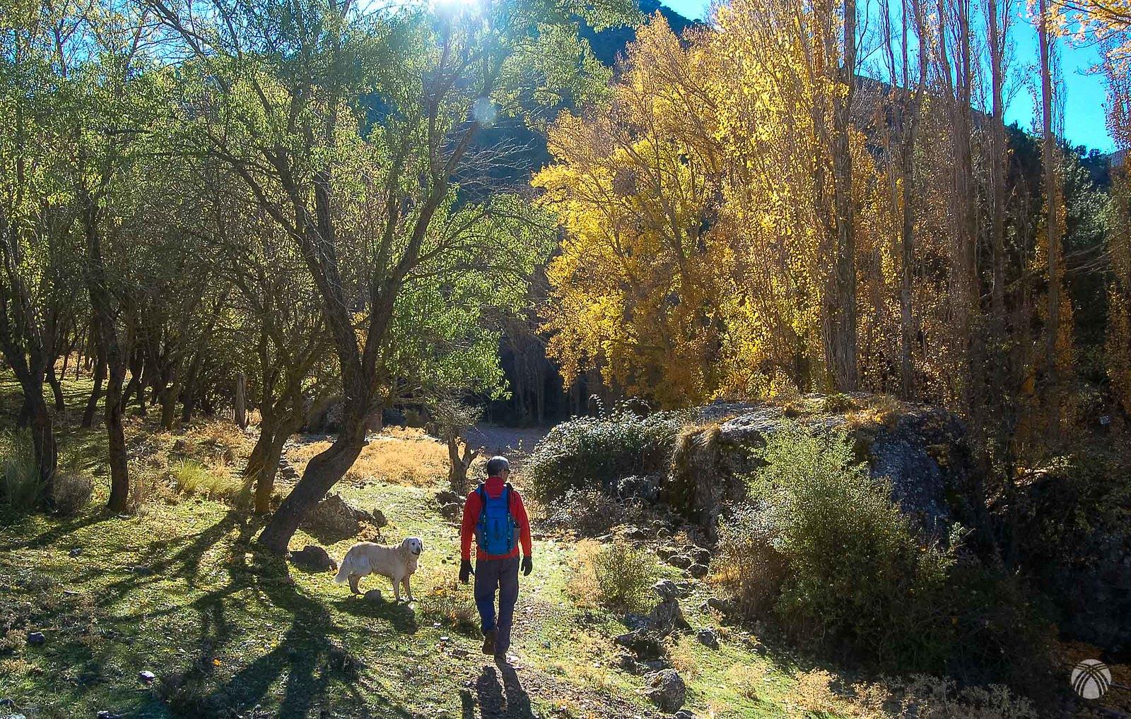 Ambiente otoñal en la confluencia del barranco de la Fonfría