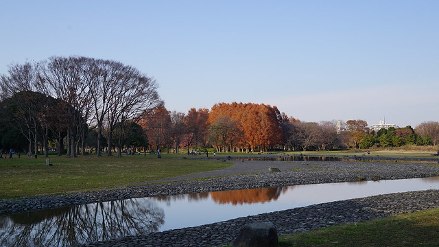 DSC05915水元公園