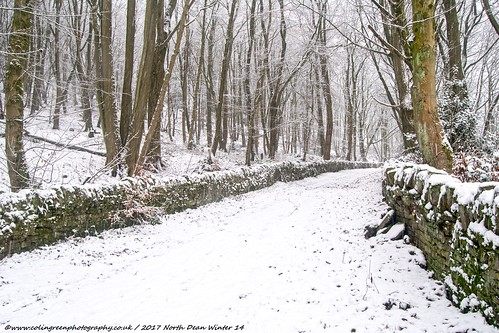Winter at North Dean Woods.