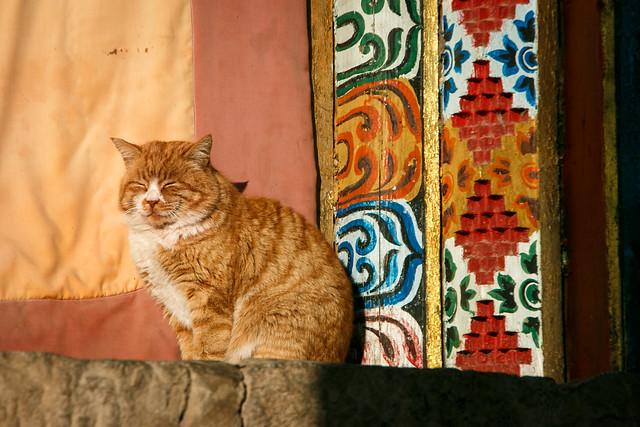 A cat in Kandze Monastery, Garzê 甘孜 カンゼゴンパのネコ