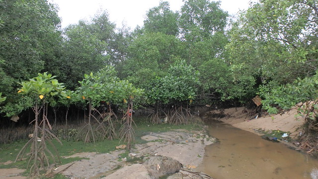 Young saplings at Loyang mangrove