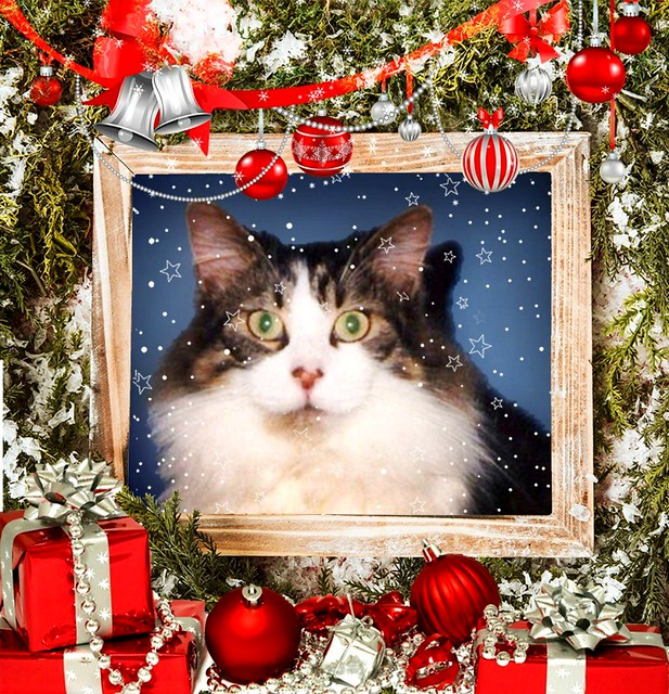 Mitzi Sitting Up Framed With Decorations And Presents