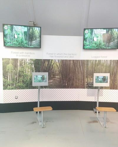 Changing bamboo forest #toronto #torontozoo #pandas #giantpandaexperience #china #bamboo #forest #latergram