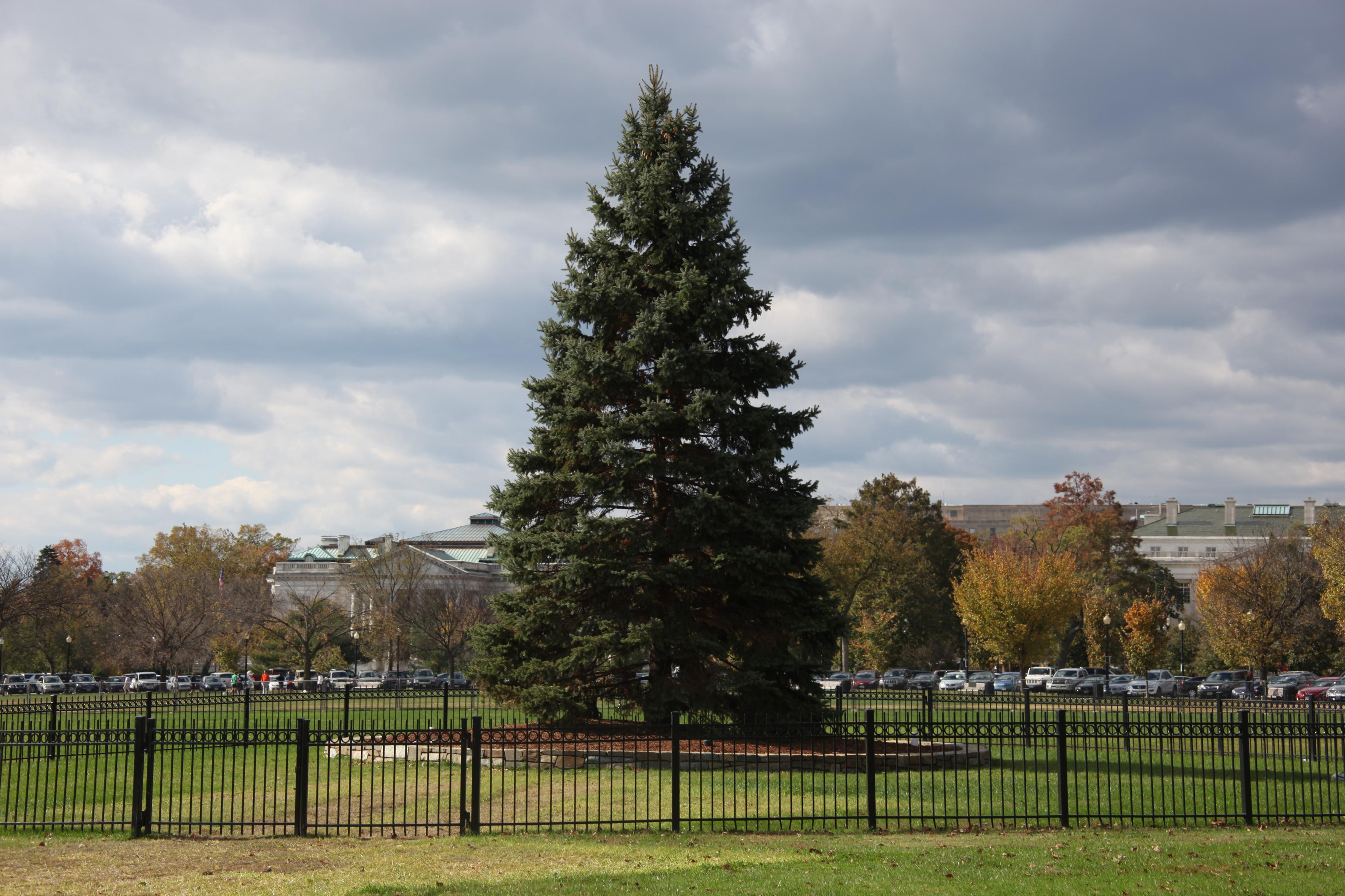U.S. National Christmas Tree on November 2, 2012