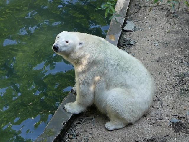 Cora, Zoo Brno