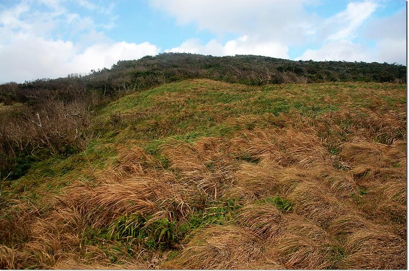 溪仔口山山坡大草原 2