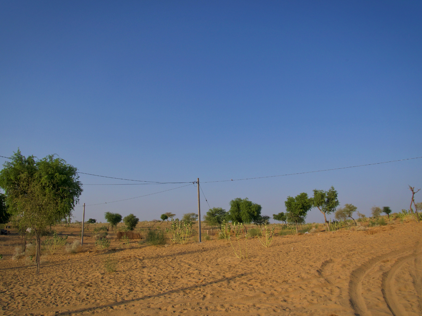 483-India-TharDesert