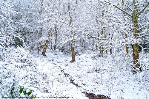 Snow at North Dean Woods 18.