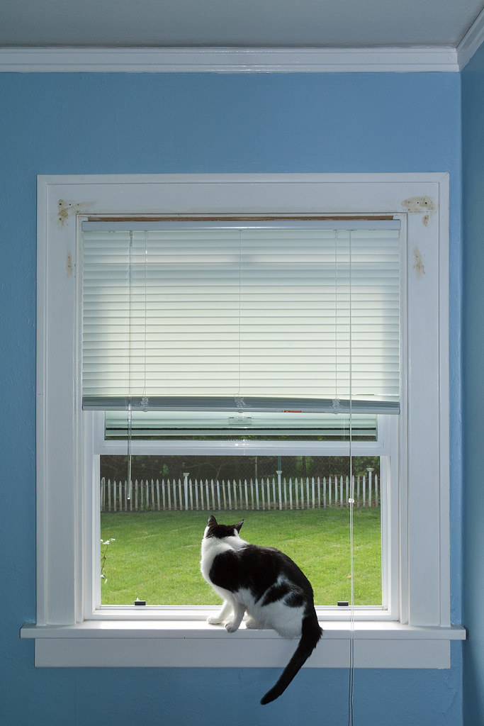 Our cat Scout looks out into the backyard from the window in my office