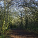 Attenborough Path
