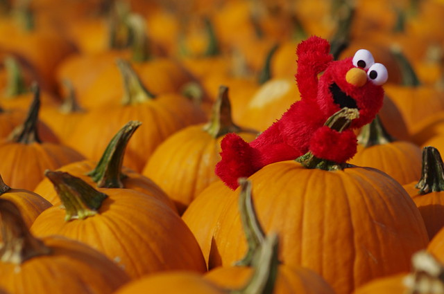 Pumpkin spread