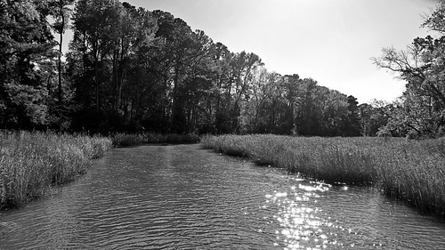 colonialnationalhistoricalpark jamestownisland jamestown virginia photo digital autumn fall estuary marsh creek stream forest wetland blackandwhite