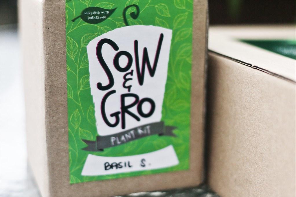 Sow & Gro Basil Plant Kit