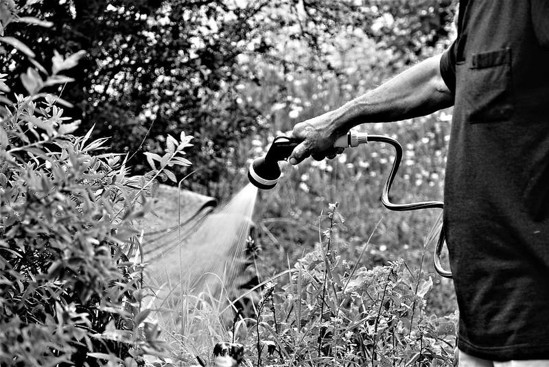 Watering the garden 31.05 (2)