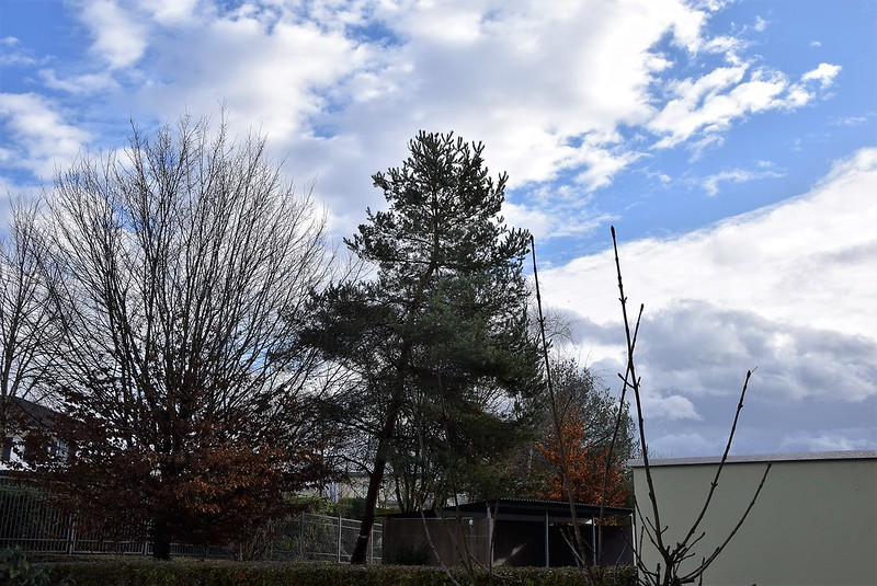 Falling Tree Hurricane Burglind 03.01 (3)