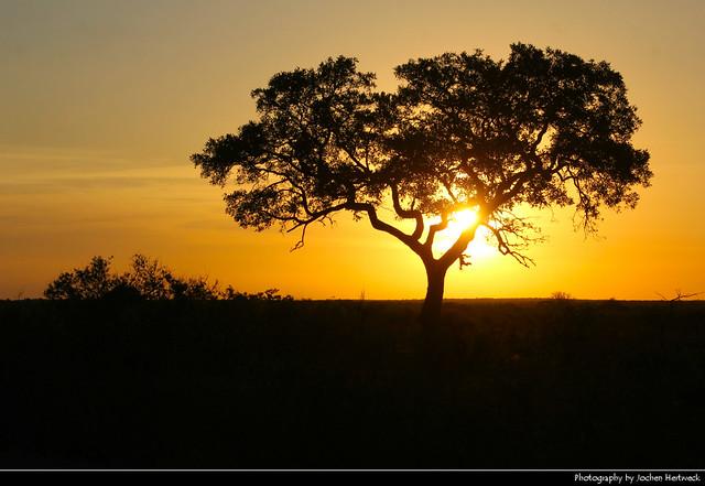Sunset, Kruger NP, South Africa
