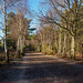 Winter on Horsell Common-EC080356