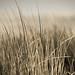 Side lit dune grass