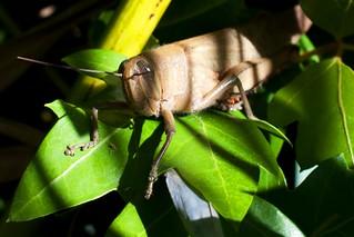 a grasshopper in shade