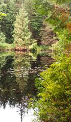 Mundy lake reflection