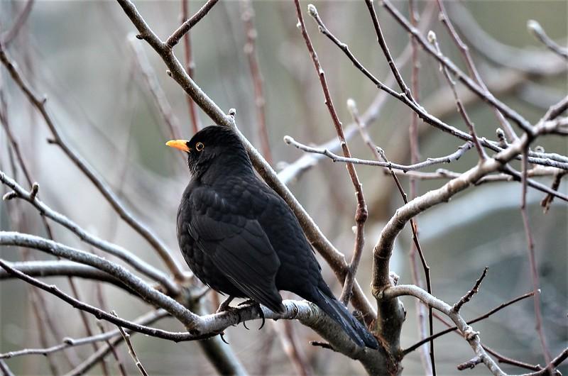 Blackbird 13.12 (6)