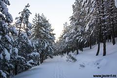 El camino en el bosque