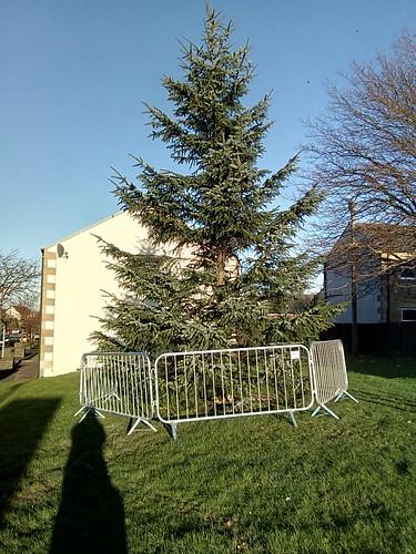 Sunniside Christmas tree Nov 17 (1)
