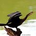 Pájaro serpiente por castellanosfenix04