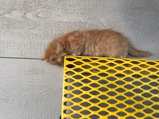 Photo:kitten on the edge By Lynn Friedman