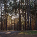 Winter on Horsell Common-EC080360