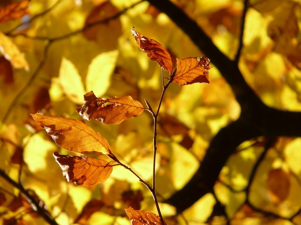 autumninkorea