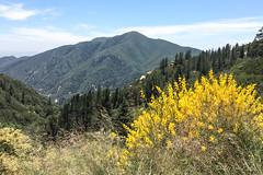 Mountain View 4857