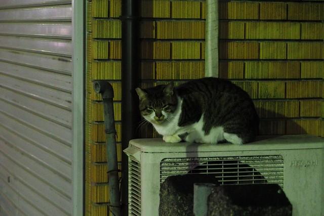 Today's Cat@2017-12-20