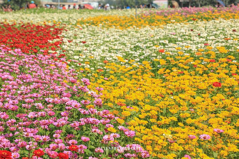2017臺中國際花毯節22