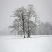 snow tree Snooks moor...