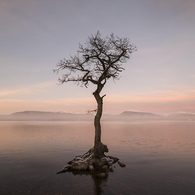 Cold sunrise, Nikon D850, PC-E Nikkor 24mm f/3.5D ED